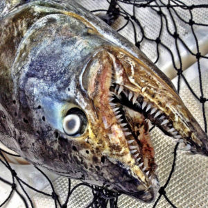 fishing-charters-Mackinaw-
